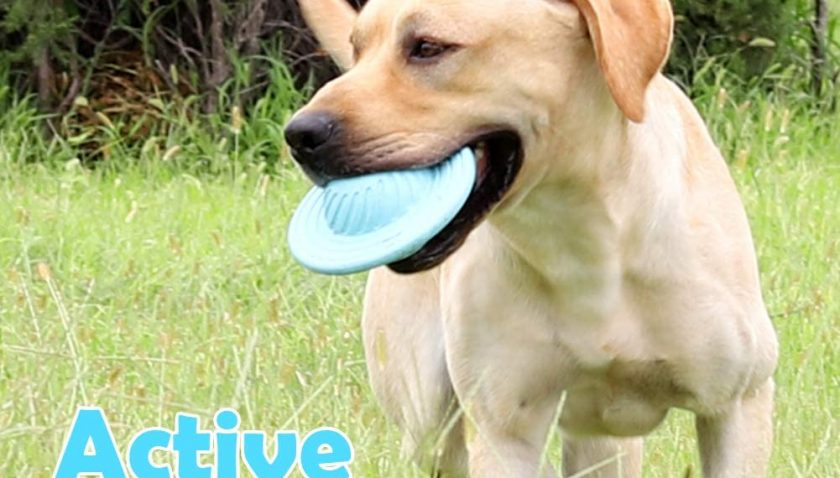50% Discount for PetFun Dog Puzzle Toys for Large Dogs