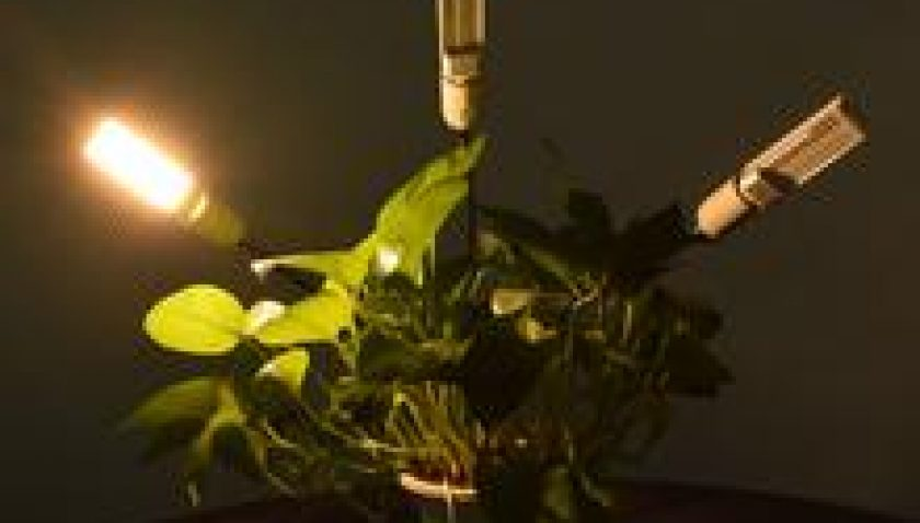 10% Discount for 60W 5V Dimmable Three-head Flat Clip Corn Plant Light