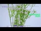 Artificial Gypsophila Paniculata Decor , Home Office Kitchen Table Decoration
